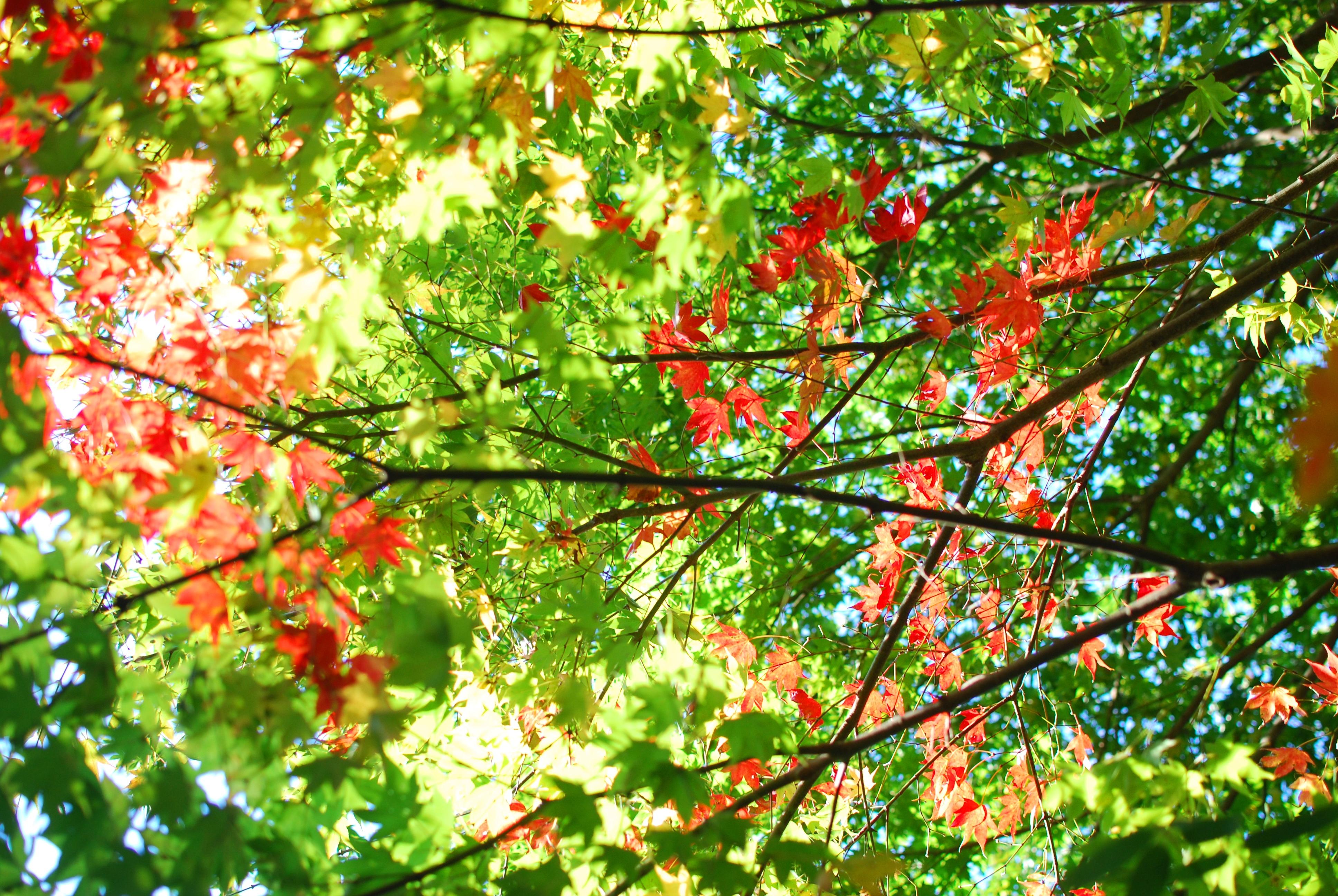 紅葉が始まった‼