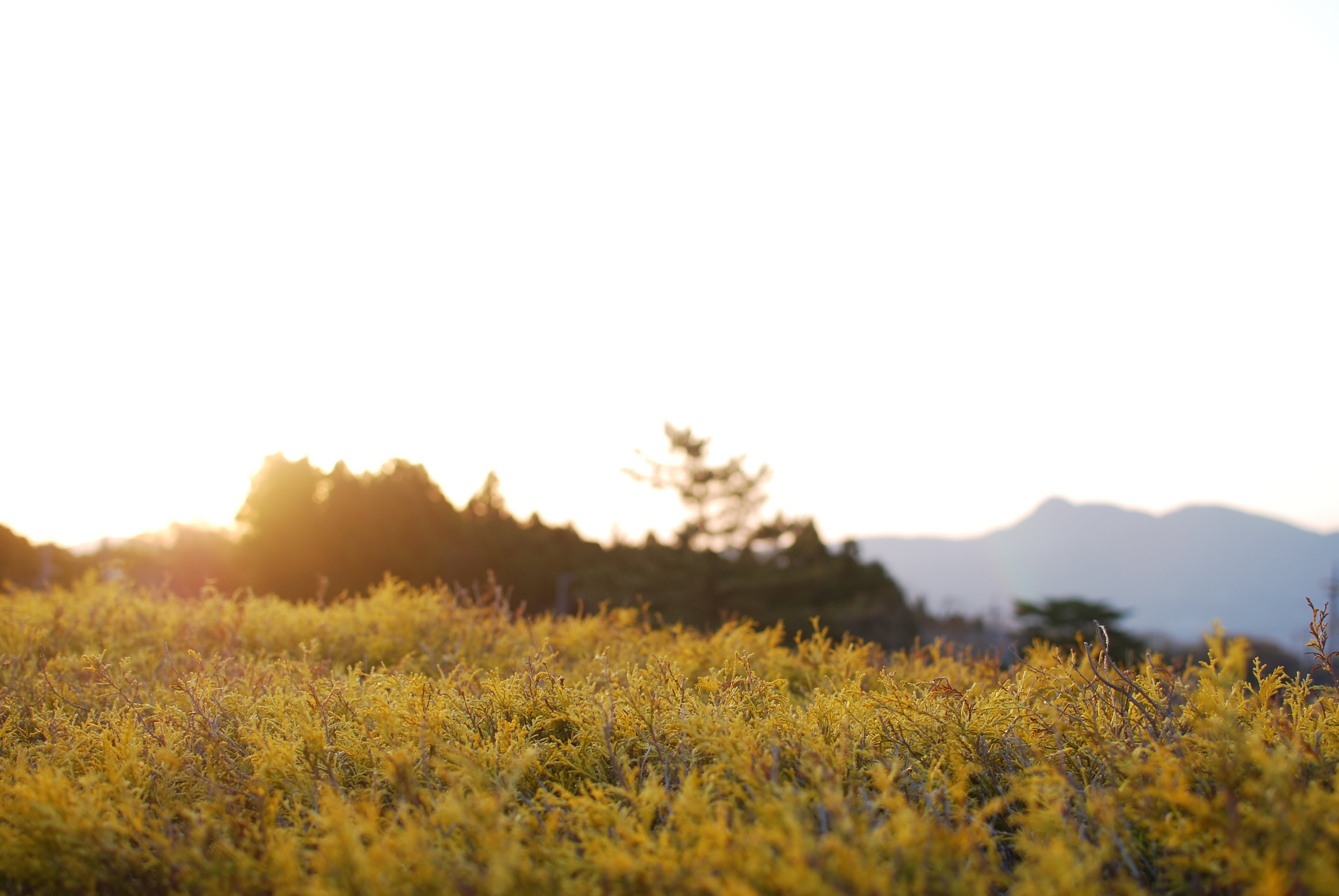 桜満開!朝は氷点下!?