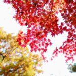 紅葉が始まりました(^^)